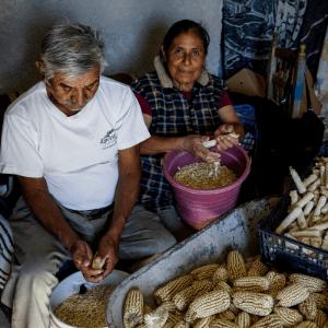 Mexico Financial Diaries