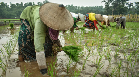 Pioneering Solutions in Digital Finance for Climate Resilience